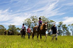 Port Macquarie Horse Riding Centre - tourismnoosa.com
